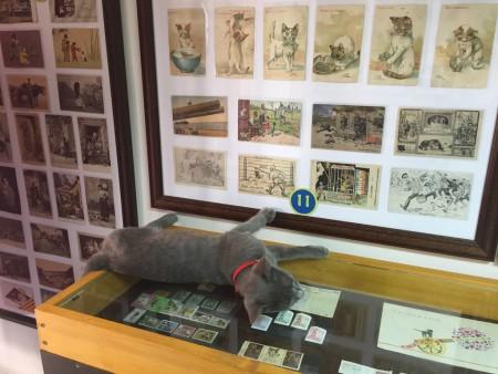 CATS MUSEUM