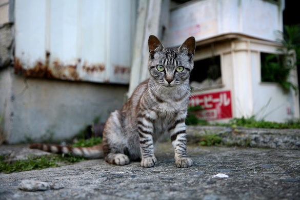 CAT ISALND
